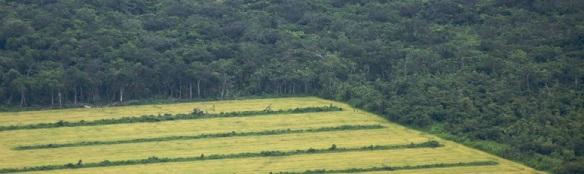 jordbruk och regnskog i brasilien