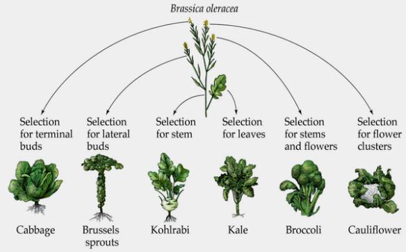 Syntetiska grönsaker